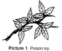 poison ivy has three leaves