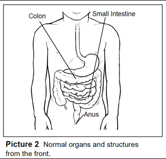 Normal organs and structures from the front.