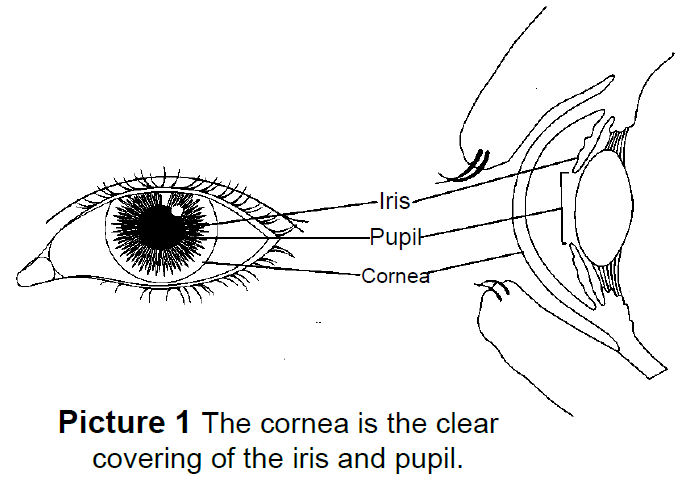 the cornea is the clear covering of the pupil and iris