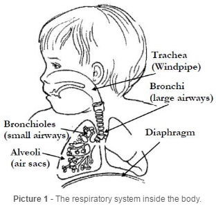The respiratory system inside the body