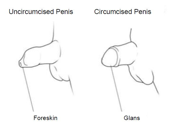 Stor uncircumsized penis