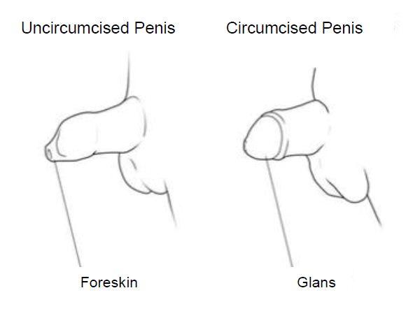 putting condom on uncircumcised penis