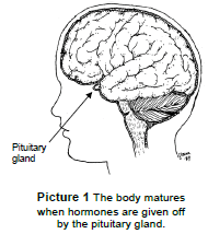 The body matures when hormones are given off by the pituitary gland