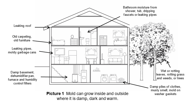Mold can grow inside and outside where it is damp, dark and warm.