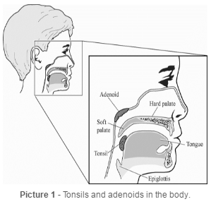 Tonsils and adenoids in the body.