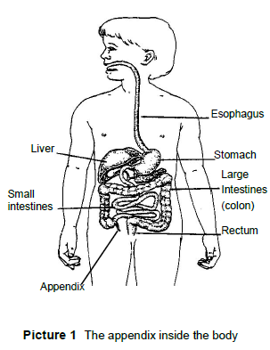 diagram of digestive track