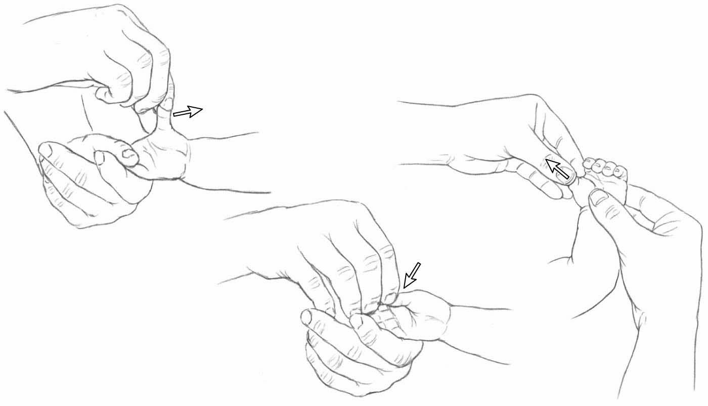 Thumb Abduction and Adduction