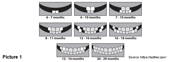 Dental: Teeth and Gum Care for Infants and Toddlers