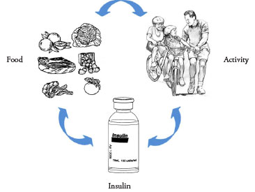 depiction of the circular relation of food, activity, and insulin