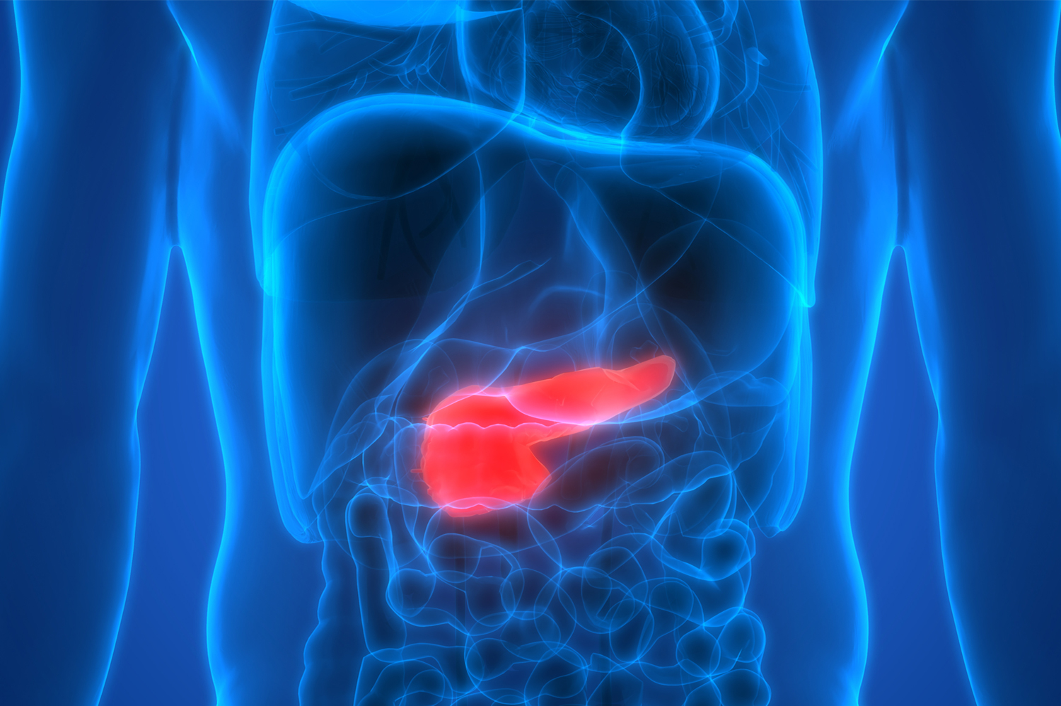 Image of a pancreas