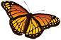 large monarch butterfly