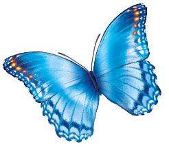 large light blue butterfly